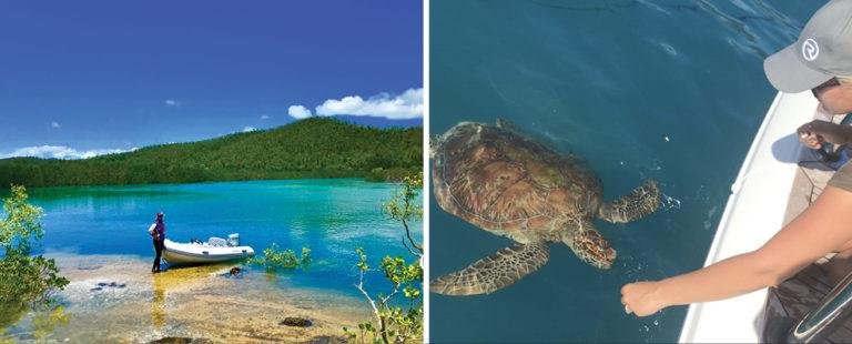 Left: Chasing mud crabs at Hill Inlet, Whitsunday Islands in Queensland. Right: Feeding a turtle in the Whitsundays. - photo © Riviera Australia
